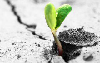 Foto di un germoglio - tratta da: www.caritastarvisina.it